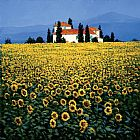 Mediterranean paintings - Sunflower Field by Steve Thoms
