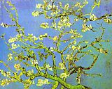 Vincent van Gogh Branches of Almond tree in Bloom painting