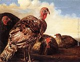 Aelbert Cuyp Domestic Fowl painting