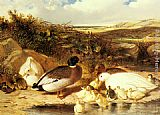 John Frederick Herring Snr Mallard Ducks and Ducklings on a River Bank painting