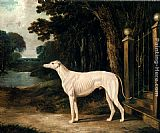 John Frederick Herring Snr Vandeau, A White Greyhound painting