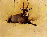 Wilhelm Kuhnert A Common Waterbuck painting