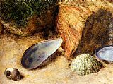 William Henry Hunt Still Life With Sea Shells On A Mossy Bank painting