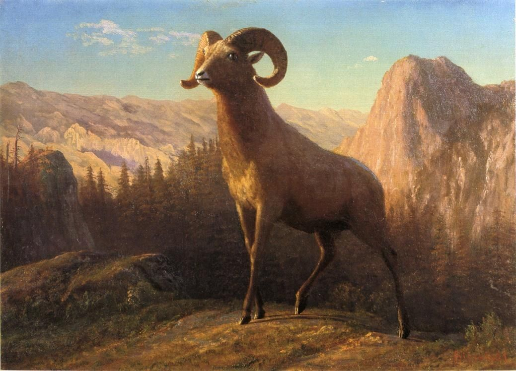 Albert Bierstadt A Rocky Mountain Sheep Ovis Montana