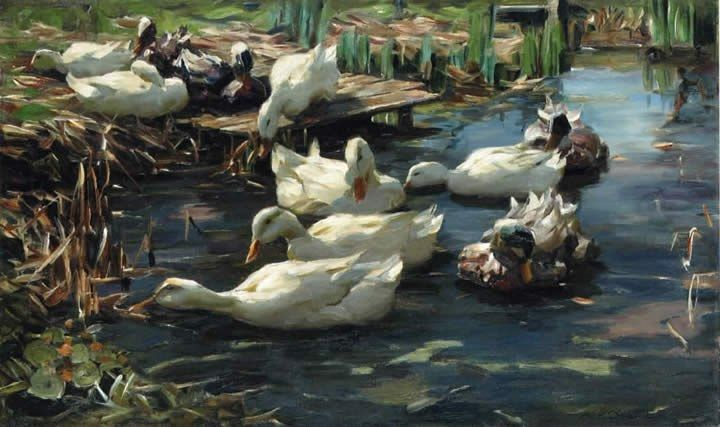 Alexander Koester Ducks in a Quiet Pool
