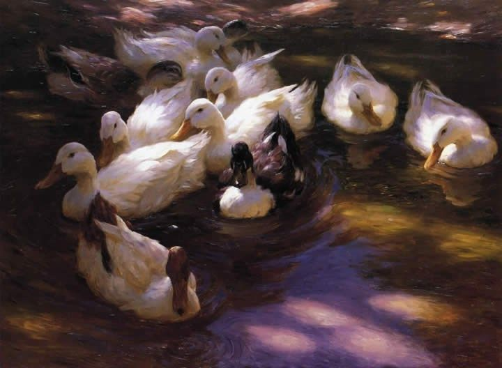 Alexander Koester Eleven Ducks in the Morning Sun