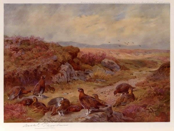 Archibald Thorburn Grouse on the Peat Bogs