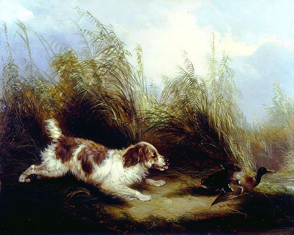 George Armfield Spaniel Flushing Mallard