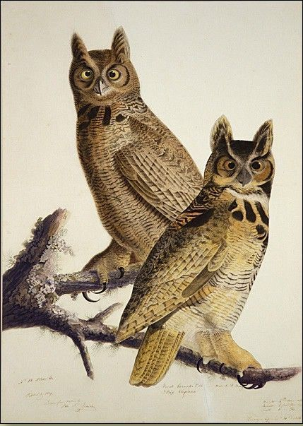 John James Audubon Great Horned Owl
