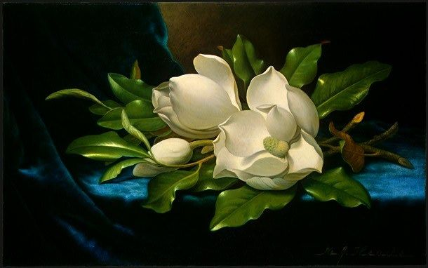 Martin Johnson Heade Giant Magnolias on a Blue Velvet Cloth