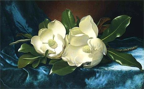 Martin Johnson Heade Magnolias on a Blue Velvet Cloth