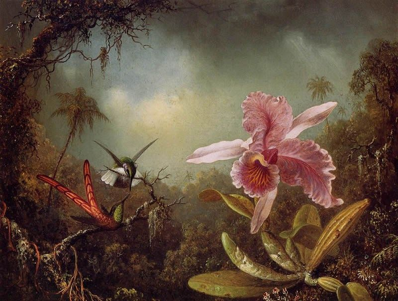 Martin Johnson Heade Orchid with Two Hummingbirds