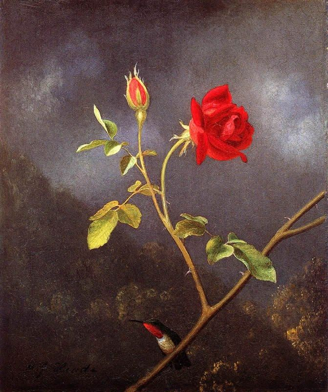 Martin Johnson Heade Red Rose with Ruby Throat