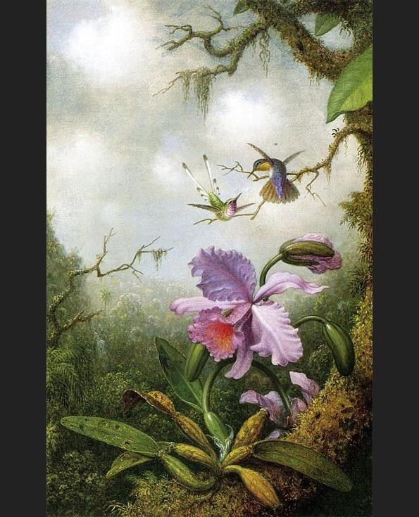 Martin Johnson Heade Two Hummingbirds with a Pink Orchid