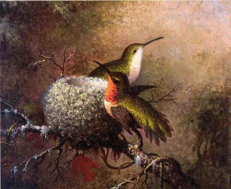 Martin Johnson Heade Two Ruby Throats by their Nest