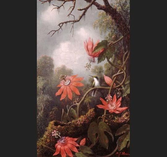 Martin Johnson Heade Hummingbird and Passionflowers