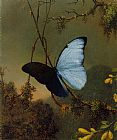 Martin Johnson Heade Blue Morpho Butterfly painting